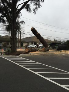 Tree Service - Trunk Removal